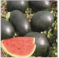 Water Melon by PandoraBiz.com